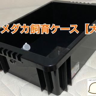 メダカ飼育ケース【大】
