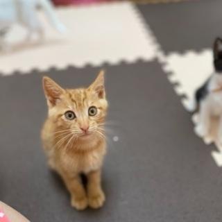 《7/22〜7/24 子猫だけのミニ譲渡面談会》
