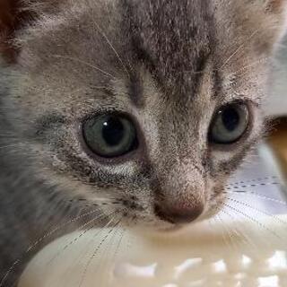 野良猫が出産して、6週目位の女の子です。