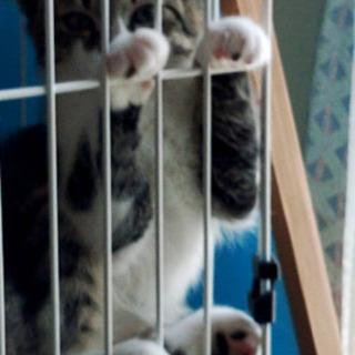 生後3ヶ月のメス猫ちゃん