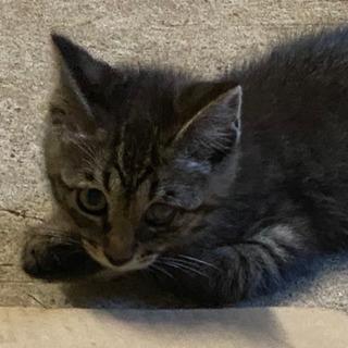 急募!! かわいい子猫