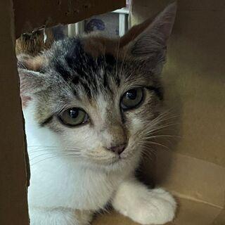 やっと助かった命を繋いでいただきました。今では先住猫に可愛…