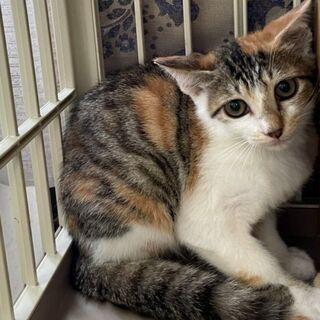 やっと助かった命を繋いでいただきました。今では先住猫に可愛がられて、幸せな生活を送る事が出来ました~ - 猫