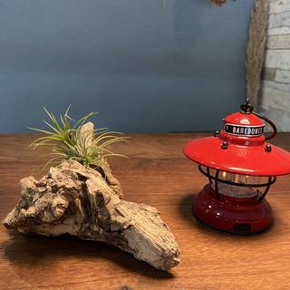飾ってオシャレな流木…天然物、オブジェ、インテリア