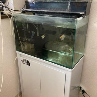 【明日8月1日まで特別価格】60センチ水槽 水槽台 各種フ…