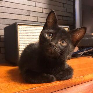 可愛い黒猫くぅちゃん