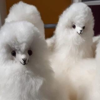 【高円寺】Portico(ポルティコ)さんのアルパカの原毛で作っ...