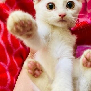 素晴らしいご縁になりました!!⭐️母猫が誘導した子猫たち 珍しい...