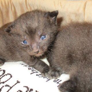 元気な黒い子猫(交渉中です)