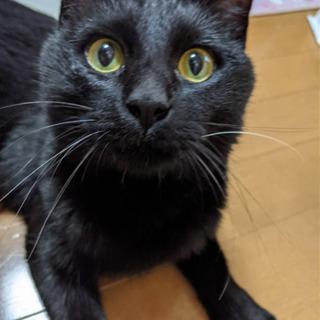 イケメンな黒猫くん