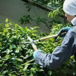 【日払い】庭仕事に関わる職人さん、元職人さんを募集しています