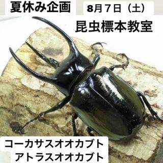 夏休み子どもワークショップ 昆虫の標本教室