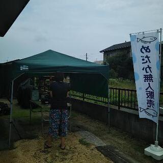 めだか【メダカ】無人販売