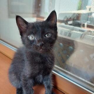黒猫🐈⬛兄弟 仔猫3ヶ月