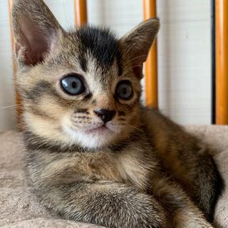 【生後3ヶ月】子猫