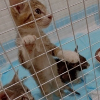 一度募集をストップします!子猫4匹の里親さま募集!
