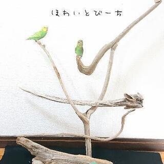 流木止まり木・バードタワーNo.24