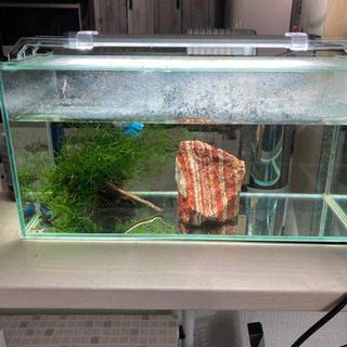 ガラス製水槽