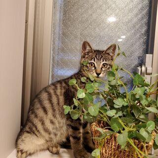 子猫(女の子3ヶ月)です♪写真のゲージ·トイレ等差し上げます!