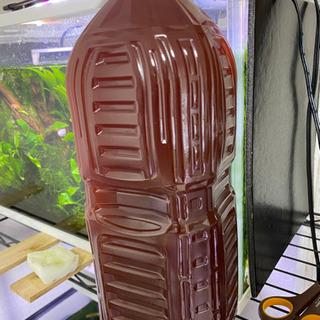 PSB(光合成細菌)メダカの育成に!
