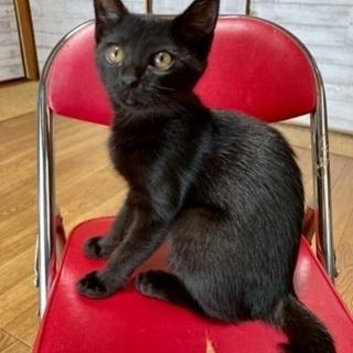 黒真珠✨美猫ロクちゃん3ヶ月🐱