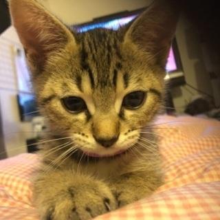 可愛い生まれて3ヶ月の男の子猫ちゃん