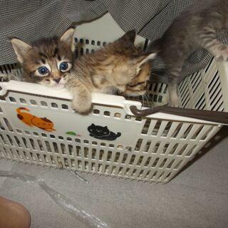 生まれたばかりの3匹の兄弟猫です