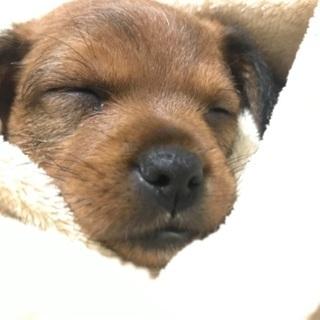 再募・生後2ヶ月のミックス犬