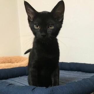 黒猫ティム君。 3ヶ月くらい