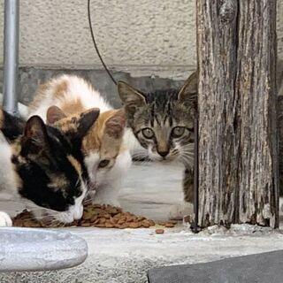 仔猫の仲良し兄妹とママ猫の里親さん募集中です✨