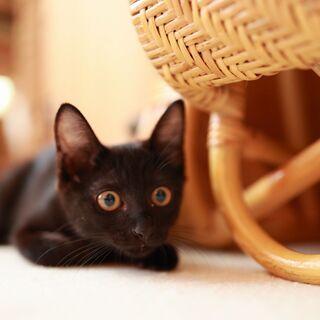 手足の長いイケにゃんの黒猫