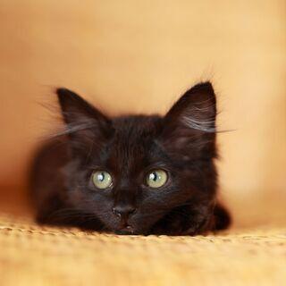 「里親さま決定」モコモコふわふわの黒猫さん
