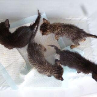 台風の日に保護した子猫4匹