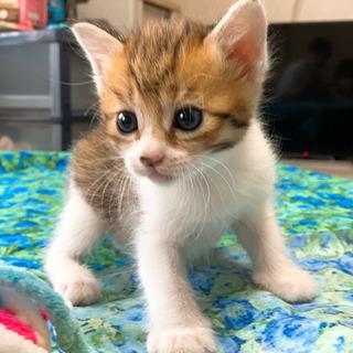 子猫✪里親募集