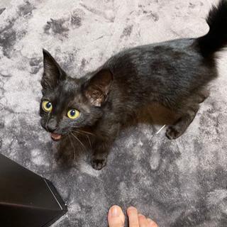 【8/7トライアル決定!】子猫の里親さんを探しています【生後3ヶ...