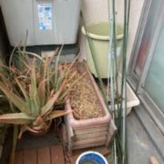 植木鉢、植木支柱、アロエ、オリーブまとめ売り