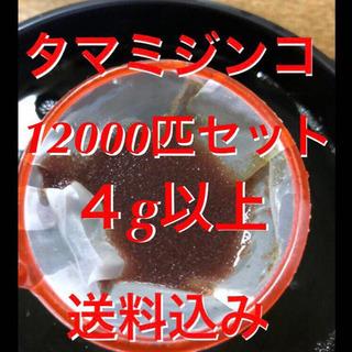 【ネット決済・配送可】タマミジンコ12000匹セット!酸素ボンベ...