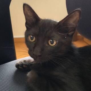 可愛い黒猫のキュウちゃん