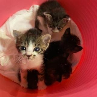 生後3.4週目の子猫達4匹 野良猫の赤ちゃん