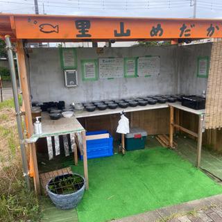 【ネット決済】里山公園前 メダカとミジンコの無人販売所 7/30出店