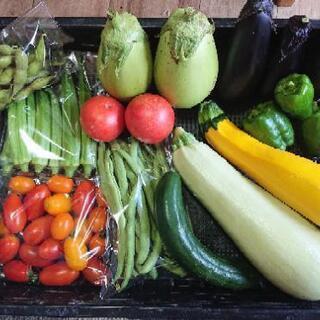 【農薬不使用】2021夏野菜セット