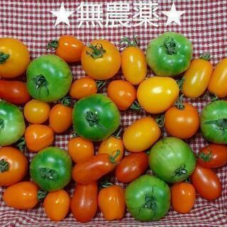 【ネット決済】★無農薬★ミディ&ミニトマトたっぷりセット