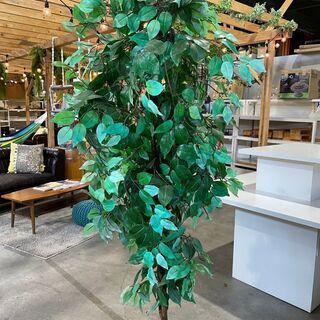 ¥500(税込)で譲ります。中古ディスプレイ観葉植物