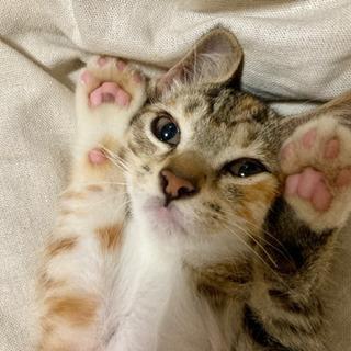 【受付終了】生後約3ヶ月の子猫♀里親募集