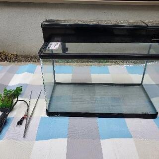 GEX 60cm 水槽