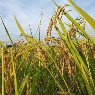 新米☆令和3年高知県産 コシヒカリ 30kg玄米