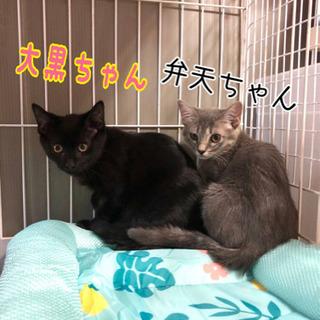 急募 3ヶ月可愛い子猫たち
