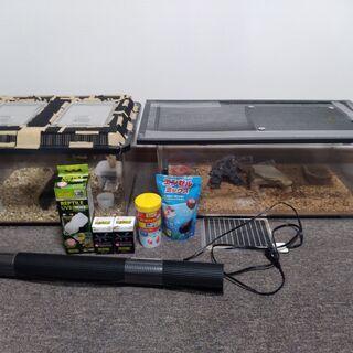 (値下げ交渉可)カナヘビ等爬虫類&コオロギ飼育セット