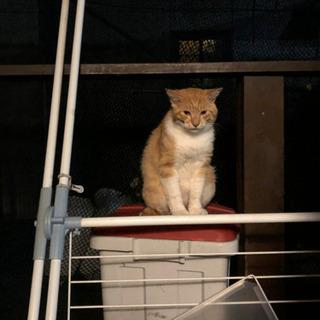 野良猫らしからぬ、甘ったれ去勢済み