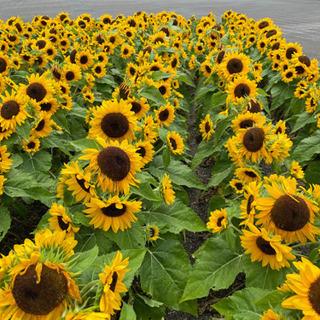 お花屋さん 現場での植栽植え 個人事業主 フリーランス